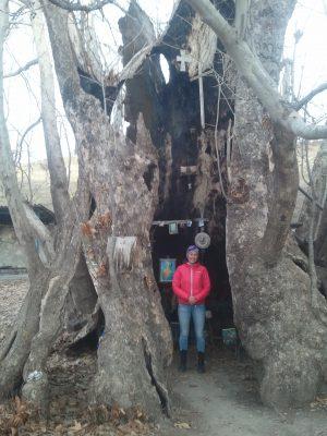 Nu äger jag inte bara en flaska heligt vatten, jag har även varit inne i ett magiskt träd.