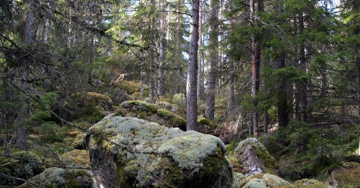 norra_kvills_nationalpark