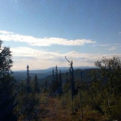 Kommer sakna mina morgon jogg kring fröåns naturreservat. Fjällskog o kalfjäll